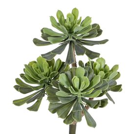 Aeonium bush x4, Ø 14/11/10cm, 33cm