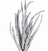 Haworthiabush x18, 33cm