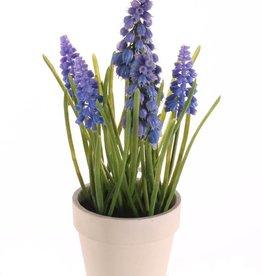 Blauw druifje (Muscari) x3 gr.blm, x3 kl.blm, x35bld, in creme paper pot, 25cm