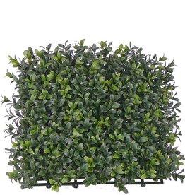 "Boxwood hedge outdoor ""natural"" element UV-SAFE 25*25cm, 300tips - special offer"