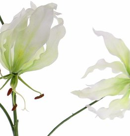 "Lelie gloriosa ""Liv"", 3 flrs, 1 bud, 80cm"