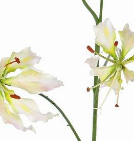 "Lelie gloriosa ""Liv"", 3 bloemen,   80cm"