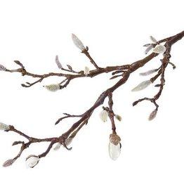 Magnolia tak met knoppen