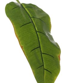 Banana leaf, medium, coated, 96cm