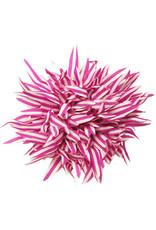 Drukkerapplicatie Gestreepte bloem spits, cyclaam-wit