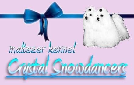 Maltezer kennel Crystal Snowdancers