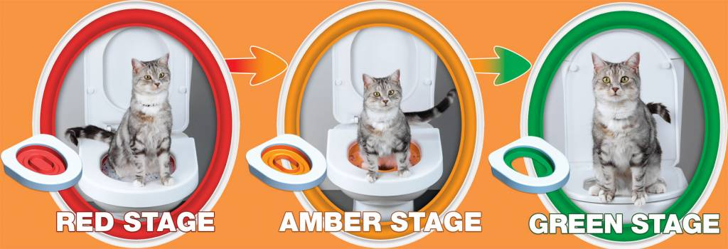 how to teach a cat to use the toilet