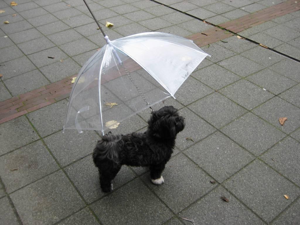 Dog Coat From Old Umbrella