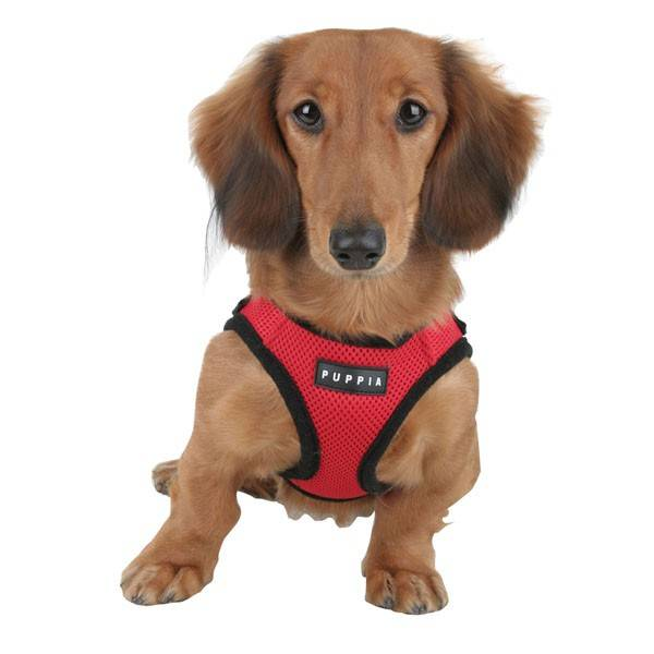 How To Put On A Dog Harness Video