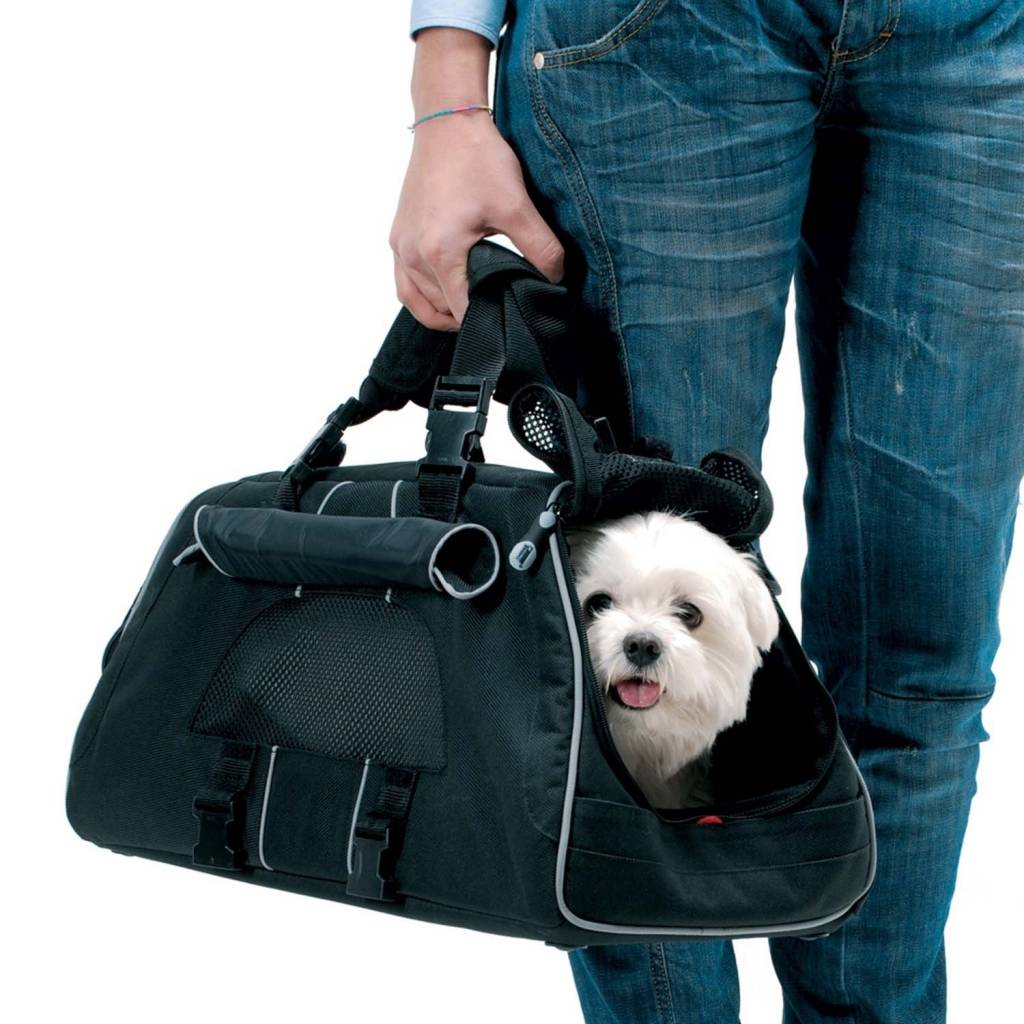 Can I Carry My Small Dog On The Plane