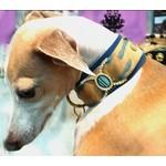 Exclusieve hondenhalsbanden