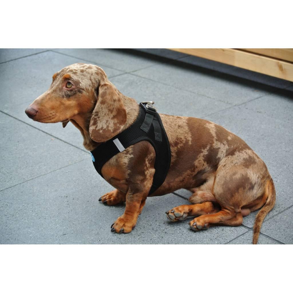 Curli Hondentuig AirMesh Harness Black  Petsonline ~ Geschirr Xxs