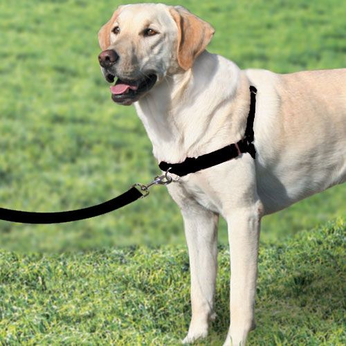 Front Lead Small Dog Harness