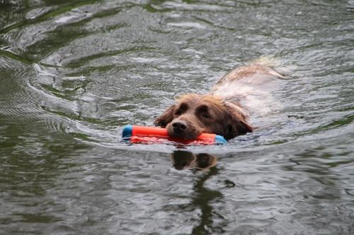 Hondenspeelgoed Amphibious Bumper