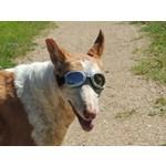 Zonnebril voor de hond