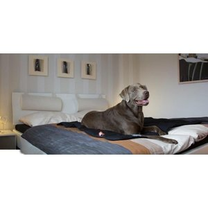 Doctor Bark Dog Blanket Black