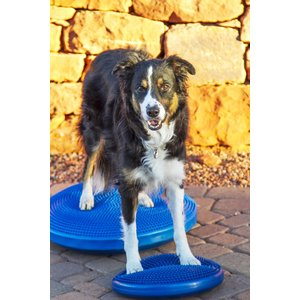 FitPAWS Balance Disk