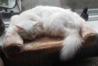Kerbl Cat Bed