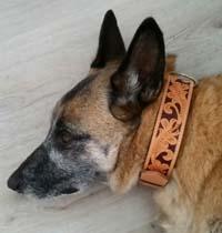 Dog Collar Ornamentz