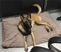 Dog Cushion Rebel Petz
