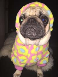 Dog Coat Pink Flowers