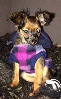 Dog Coat Fleecejacket