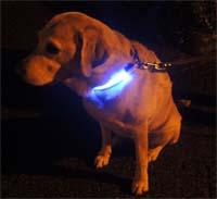 blue led dog collar