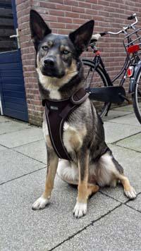 Belka Dog Harness