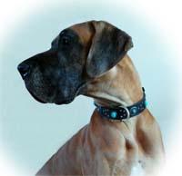 Cherokee dog collar