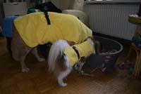 doggy dry dog bathrobe
