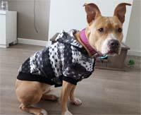 dog coat snowflake