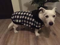 Dog Coat Chess