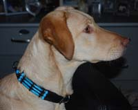 Dog Collar Blue River