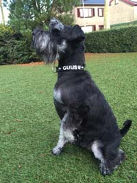 Dog Collar with name