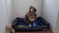 Black Leatherette Dog Bed