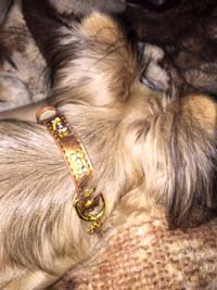 Dog Collar Glitterbones
