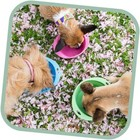 Beco Pets Drinkbak of voerbak Travel Bowl Roze