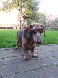 Dog Sunglasses of Dogoptics