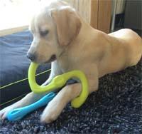 Zogoflex Dog Toys