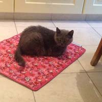 Cooling Pad for pets