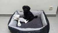 Scruffs dog bed