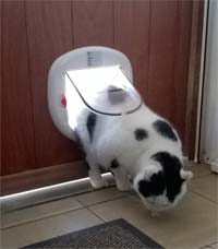 Catflap for large cats