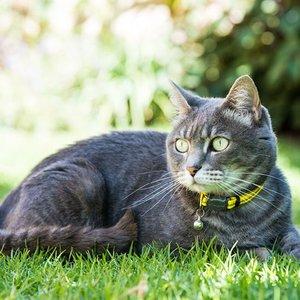 Rogz Cat Collar AlleyCat Dayglo