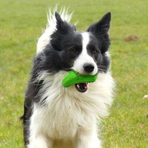 Major Dog Dog Toy Zucchini