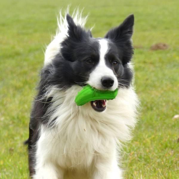 Hondenspeelgoed Zucchini