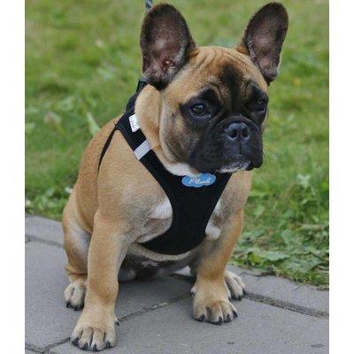 Curli Dog Harness Air Mesh Black
