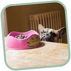 Beco Pets Drinkbak of voerbak Beco Bowl Roze