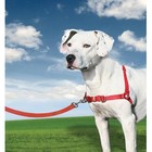 Petsafe Anti-Trek hondentuig Easy Walk ® Rood