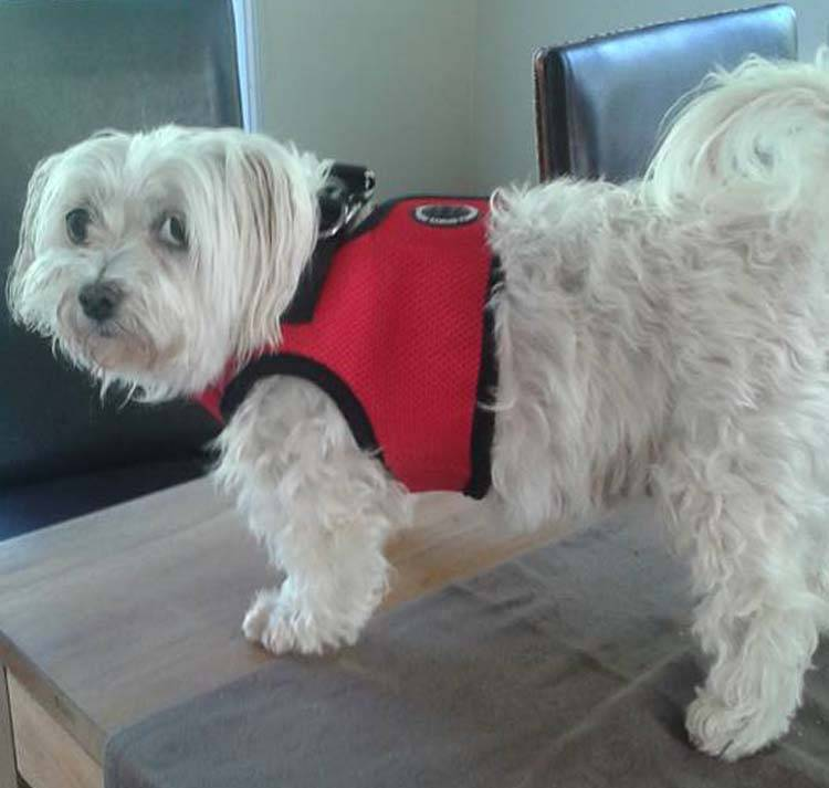Puppia Dog Harness Review