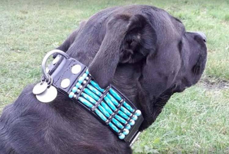 Hondenhalsband Blue River 50mm